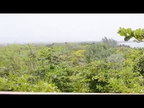 Belize Vacation - Hamanasi | Tree House