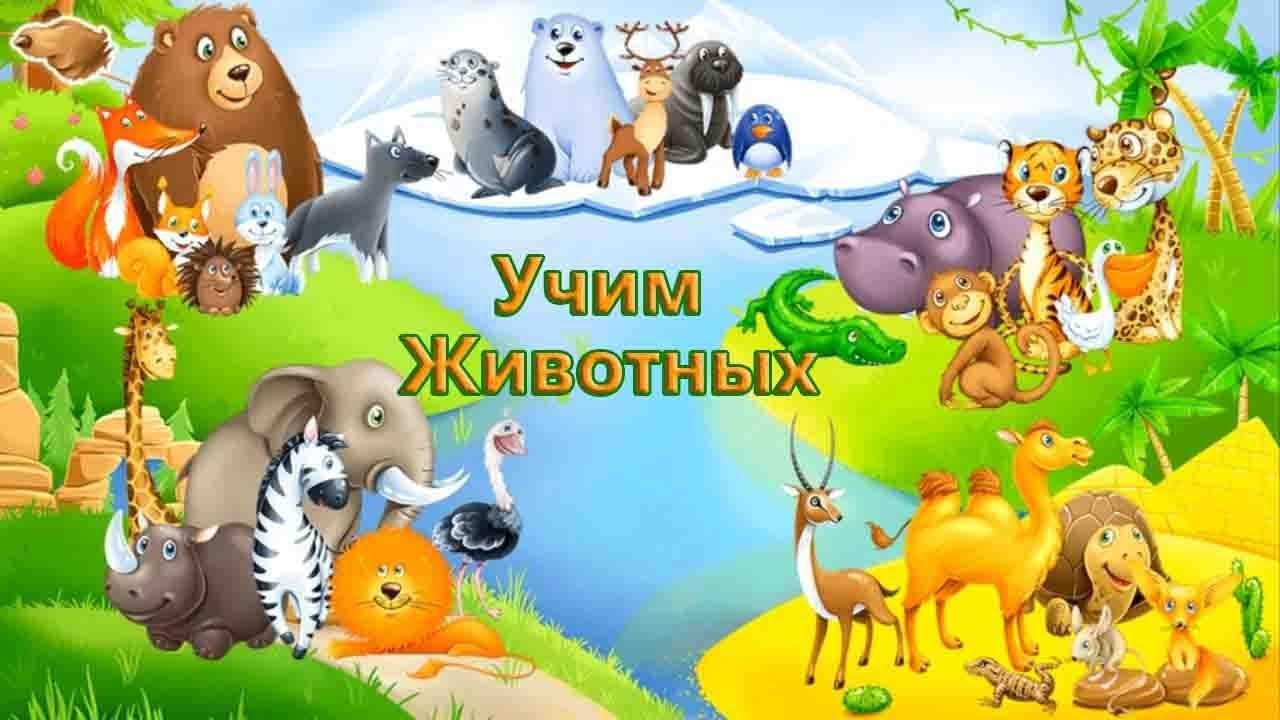 Развивающий Мультик Знакомство с Животными Для Детей - YouTube