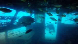 Perhentian Islands Dive August 2015
