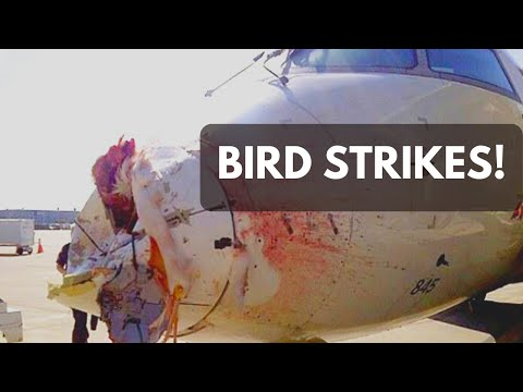ICAO Aviation English: Bird Strikes
