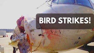 icao aviation english bird strikes