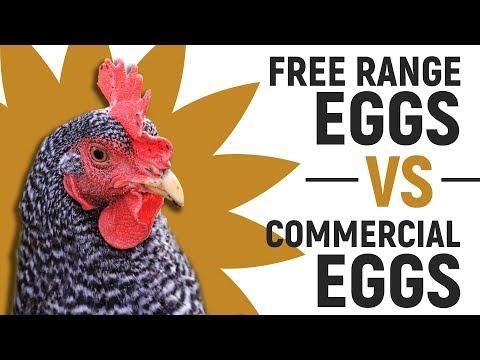 Free Range Eggs Vs. Commercial Eggs