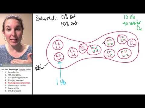 Gas exchange 5- Hemoglobin saturation