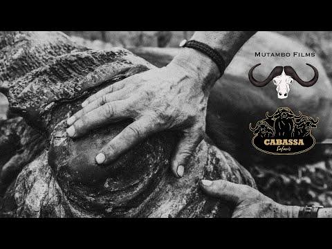 Mutambo Films 2019 Cape Buffalo Hunting Compilation