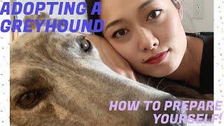 GREYHOUND DOG ADOPTION | HOW TO PREPARE FOR A GREYHOUND