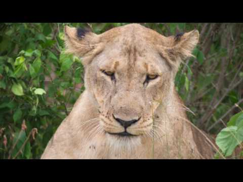 Beautiful African Safari at Murchison Falls NP in Uganda