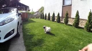 Piggy The Pug ( Xiaomi Yi Slow Motion 720p 120fps)