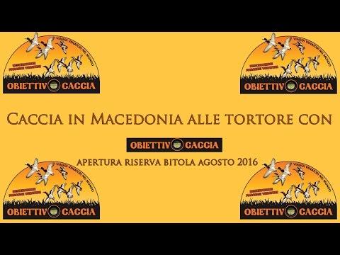 Caccia alle anatre in macedonia funnycat tv for Capanno invisibile