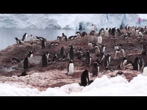 1206南極半島 - 納克港Neko Harbour - 2016南極三島 4K 全螢幕回憶