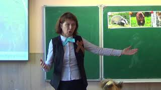 Кашина Р. В. Урок в 1А классе г.о.Звенигород, Введенская СОШ №3