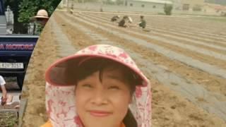 Me in the Farm . Lilibeth Hong South Korea