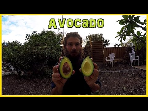 THE MIGHTY AVOCADO - RICH & CREAMY | KNOW YOUR FRUITS