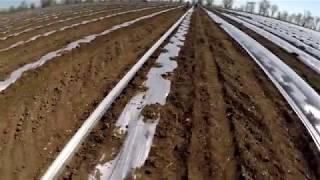 дыня - серия 4. Высадка рассады дыни. Значение и роль мульчи при выращивании дыни