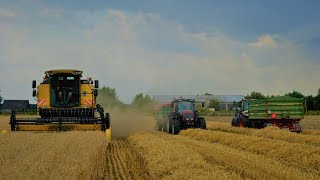 Żniwa 2019 | Pszenica & Pszenżyto | New Holland TC5050 | TheAgriPL