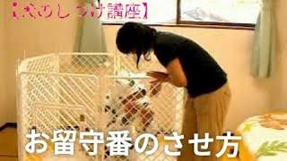 犬をお留守番させる時のしつけ方動画です ☆ペットに安全安心な消臭剤 天...