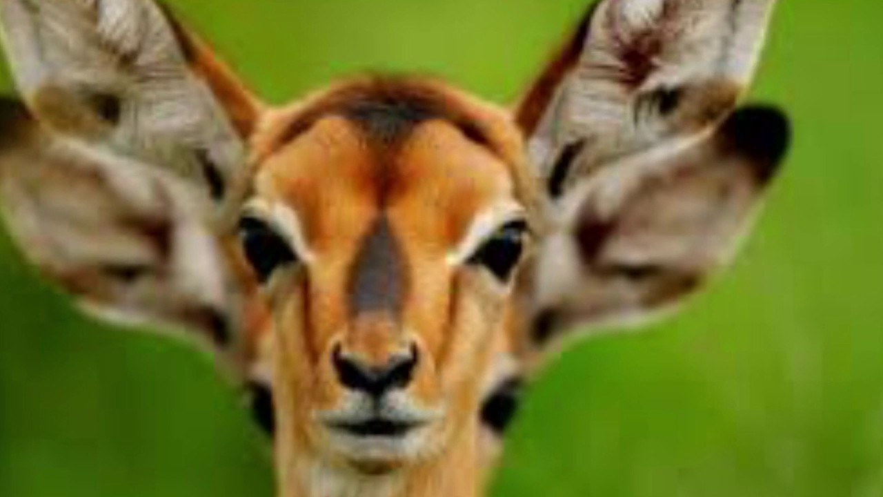 Cool animals youtube for Pictures of the coolest things in the world