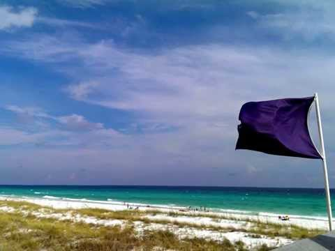 5 Most Dangerous Gulf Coast Marine Animals