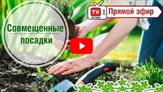 видео Малина » Садоводу, дачнику, огороднику.