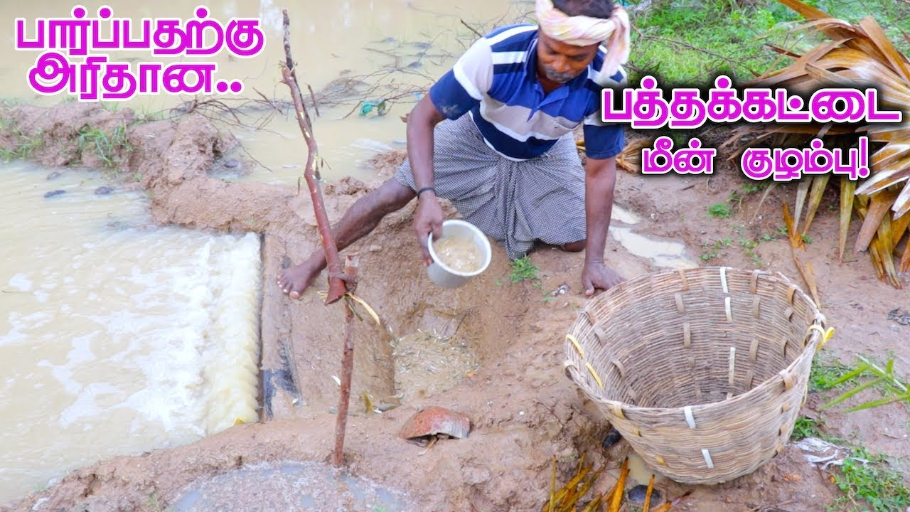 Download Pathakattai Fish Catching | Cooking | Fishing in Village using traditional fish catching technology