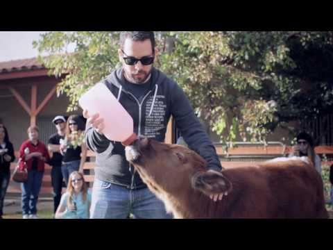 Animal Acres - Cowboy's Farewell Party