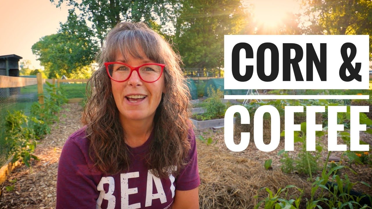 TOP 3 TIPS for GROWING CORN | For The Back Yard Gardener