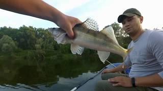 Рыбалка на Дону летом неплохие щучки и судак на джиг