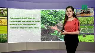 Thời tiết nông vụ 19/07/2019: Phòng trừ sâu bệnh cho lúa hè thu | VTC14
