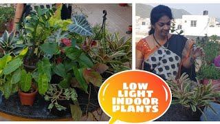 తక్కువ వెలుతురు లో పెరిగే ఇండోర్  మొక్కలు/Best low light indoor plants. #indoorplants #ornamental