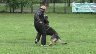 Чемпионат ЦФО 2016 г. по ОКД и ЗКС. Задержание (белая собака).