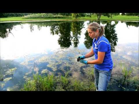 Pond Care Tips