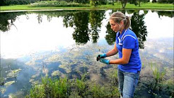 Pond Care Tips