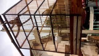 Cendet Forum Jual Beli Situbondo Angga Sye