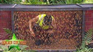 Dschungelcamp 2020   Dschungelprüfung: Hör mal, wie behämmert! - Das 1-Stern-Fiasko
