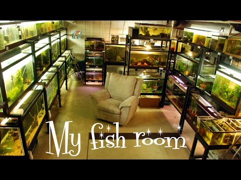 My Fish Room- A Quick And Dirty Tour