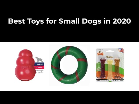 best-toys-for-small-dogs-in-2020