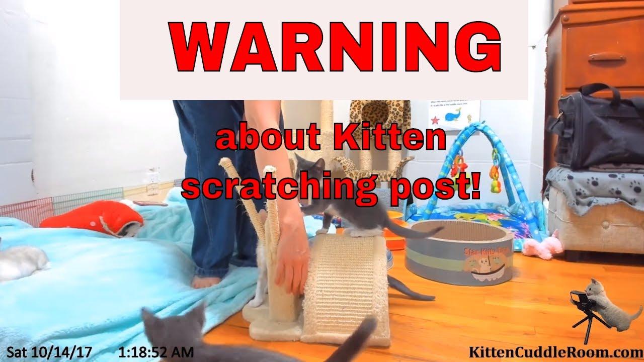 "Kittens get stuck! WARNING about the Trixie Tavira Scratching Post, aka"" Mewniverse"""