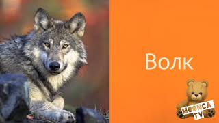 Карточки Домана животные Изучаем животных. Учим слова