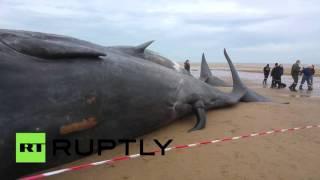 RAW: Dead sperm whales washed up on UK coast, awe locals