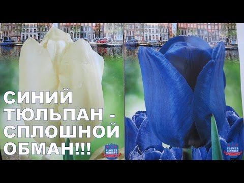 СИНИЙ ТЮЛЬПАН - сплошной ОБМАН!!!
