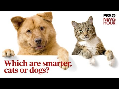 Who's Smarter - Cats or Dogs?