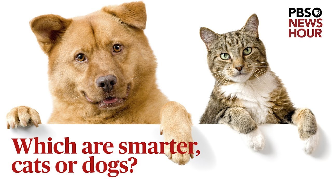 a76a746c66c9 Which are smarter, cats or dogs? We asked a scientist | PBS NewsHour