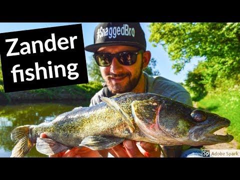 ZANDER FISHING On Canals