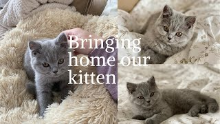 Bringing Home Our British Shorthair Kittenfirst day homeSO CUTE