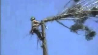 Funny Tree Cutting Fail