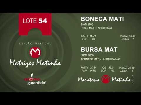 LOTE 54 Matrizes Matinha 2019
