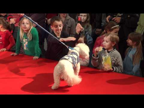 Dog Fashion Show by Premium Pet