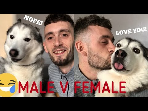 Taking Selfies With My Huskies!! [MALE v Female v Baby!] [EPIC FAIL]