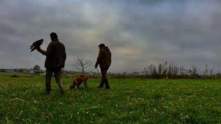 Polowanie z sokołami. Hunting with falcons