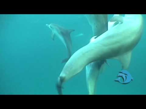 dolphin sex with humans