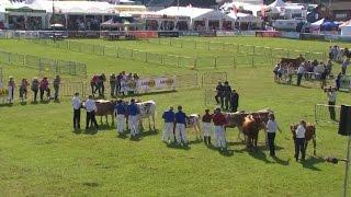 Pencampwriaethau'r Gwartheg Llaeth | More Dairy Cattle Championships